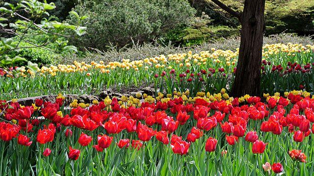 Royal Botanical Gardens Hamilton Ontario